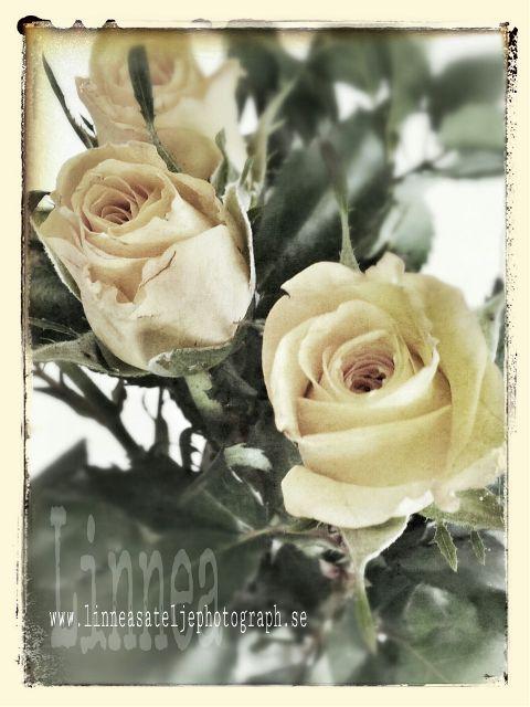 photography retro vintage flower hdr holga