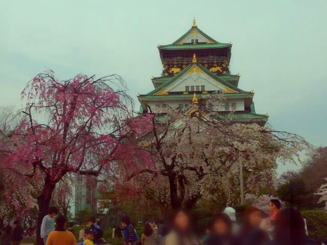 photography japan spring nature castle cherry blossom