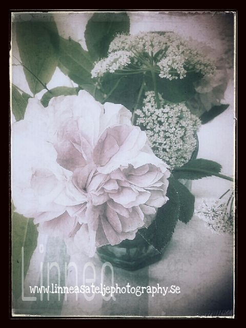 photography,retro,vintage,colorful,old photo,flower