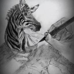 art artist draw drawn black & white drawing drawing draw drawn art artist bestdrawing animal zebra