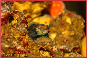 nature pets & animals photography macro fish colorful