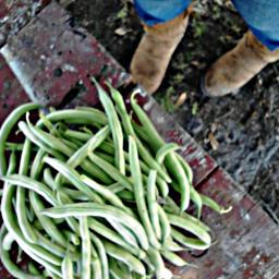 food green greenbeans garden boots country