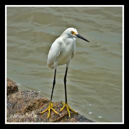 nature hdr photography pets & animals bird photostory