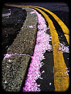 pink petals road cute flower