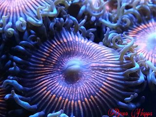 nature pets & animals photography colorful macro coral