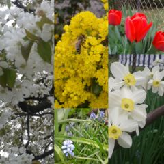 nature summer spring collage flower colorful
