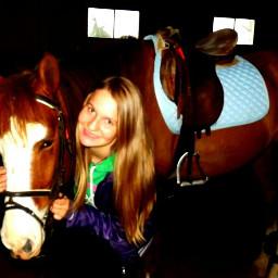 horse sweet