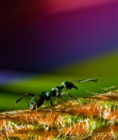photography colorful nature macro