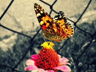 photography nature summer flower wapmulticolorsplash wapspring