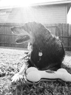 pets & animals cute photography black & white silly