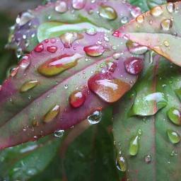 photography garden leaves rain morning dews